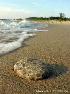 Petoskey Stone on beach.