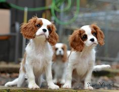 Cute puppies photography Cute-puppies-photography Cute-puppies-photography
