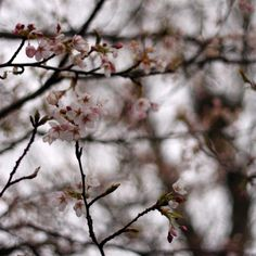 SprinG by Annie Japaud on 500px