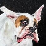 Shake: Hilarious High-Speed Photographs of Dogs Shaking by Carli Davidson~I laughed so hard!