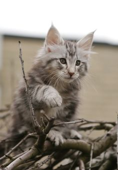 Help me out! Cattery, Help Me, Animals, Animaux, Animales, Animal, Dieren