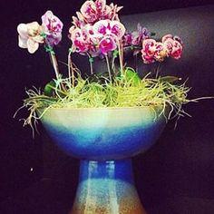 quintaldasartes (@quintaldasartes) - Instaliga is the best instagram web-viewer