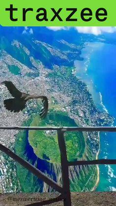 Bird Eye View