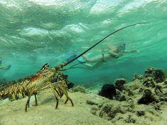 Roatan Ocean Adventures – Roatan Island Tours Roatan – Snorkerling Tours with Lobsters