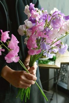 1000 Images About Sweet Peas Lathyrus On Pinterest
