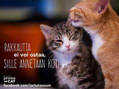 Lukuisat kodittomat kissat ympäri Suomen ovat vailla rakastavaa kotia. Tutustu Pirkanmaan kodittomiin kissapersooniin osoitteessa: https://www.facebook.com/tartutassuun