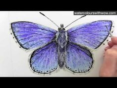 Tutorial excerpt - How to paint a realistic blue butterfly - Watercolours With WOW