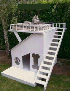 C'est mon chien de la maison. La maison est blanche. C'est une la maison interessante.