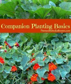 companion planting basics how to use companion plants in your garden, gardening, How to Use Companion Plants in Your Garden