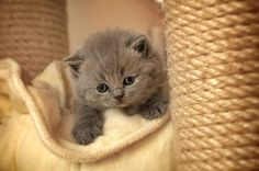 Your Daily Dose of Adorable Cute Kitten Gif, Cute Cats And Kittens, Kittens Cutest, Big Cats, Crazy Cat Lady, Crazy Cats, Baby Animals, Cute Animals, Kitten Meowing