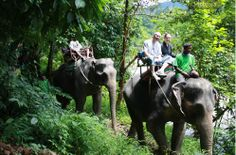 Program B2: Rafting 5 kms + Elephant Trekking      One of the most popular tourist activities when visiting Phuket, Phangnga and Krabi is white water rafting in the Phang nga river.  Whether you are white water rafting for the first time or an experienced rafter look...