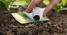 10 Fragen und Antworten zur Aussaat. Viele Gemüse- und Balkonblumen-Sorten muss man selbst aussäen, da sie als Jungpflanzen im Handel kaum erhältlich sind. Hier geben wir Antworten auf die zehn wichtigsten Fragen zur Aussaat.