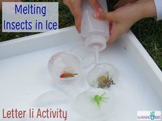 Melting Insects in Ice - Letter I Activity