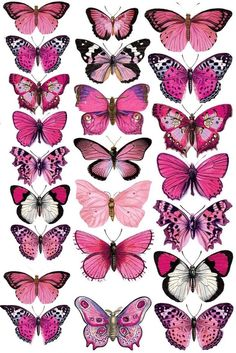 icu ~ Druckvorlage für die Deko-Schmetterlinge in 2019 Butterfly Drawing, Butterfly Painting, Butterfly Wallpaper, Pink Butterfly, Drawings Of Butterflies, Butterfly Thigh Tattoo, Pink Drawing, Butterfly Outline, Rose Drawings