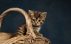 Download wallpapers small gray kitten, basket, pets, small cat