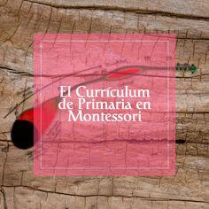 El curriculum de primaria en Montessori