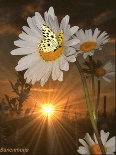 Discover & share this Animated GIF with everyone you know. GIPHY is how you search, share, discover, and create GIFs. Butterfly Gif, Butterfly Pictures, Paper Butterflies, Butterfly Wallpaper, Flower Images, Beautiful Butterflies, Beautiful Flowers, Good Morning Gif, Good Morning Images