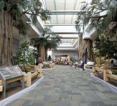 sequoiascape-at-airport
