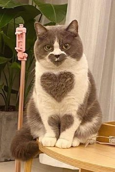 "MEOW Street Signe Cat Lover Feline Kitty ChatonsIndoor//OutdoorLarge 18/"""