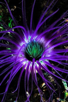 A sea anemone looks a lot like a flower, but it's actually a marine animal. In fact, it's named after the beautifully-colored anemone flower. Life Under The Sea, Under The Ocean, Sea And Ocean, Underwater Creatures, Underwater Life, Ocean Creatures, Underwater Flowers, Underwater Plants, Beautiful Sea Creatures