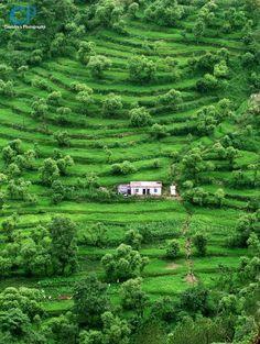 Chopta ,  Uttarakhand , India.