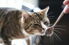 Kochen und backen für Katzen