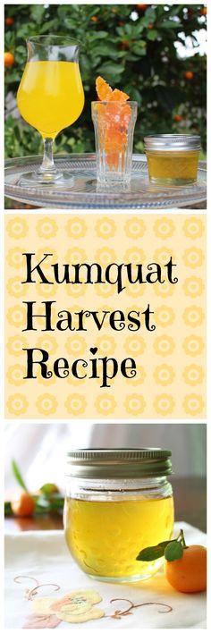 Make Kumquat-ade, Candied Kumquat Peels, and Kumquat Syrup, all from one recipe! #SundaySupper