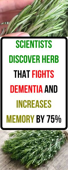Amazing! Scientists Discover Herb That Fights Dementia And Increases Memory By 75%
