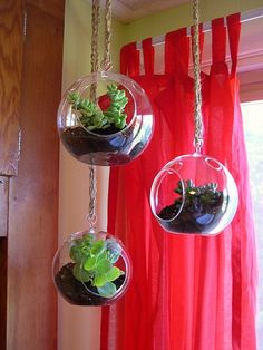 cute hanging terrariums with succulents