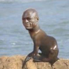 A seal!