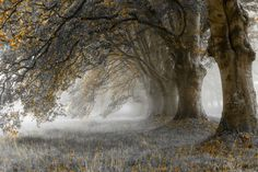 Cabin & Cottage - tulipnight:   Mist by Richard Jenkins