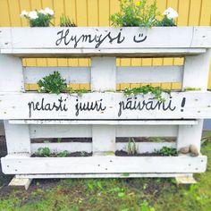 Tiesitkö että puutarhan trendivärit ovat #keltainen ja #valkoinen. Ainakin meidän puutarhassa. #kesä2016 #kesä #kuormalava #tuunaus #itetein #hymy #kesäkukat #kierrätys #järvenpää #ristinummi