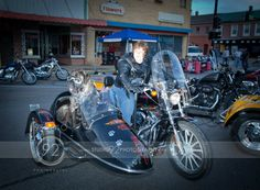 "Bev & Bertha ""Biker"" Dog at bike night !"