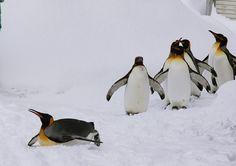 Hokkaido Asahiyama Zoo | Zoo in Wildlife