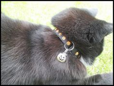Halloween Pumpkin Cat Safety Collar by WhiskersBoutique on Etsy Halloween Jack, Halloween Pumpkins, Jack O Lantern Cat, Split Ring, Cat Collars, Grosgrain, Safety, Fancy, Homemade