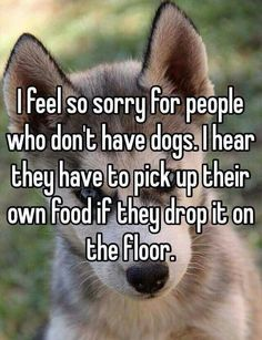 I don't have a dog, but my cat will eat my food if it drops to the floor, he eats pretty much anything, so it doesn't really matter if I have a dog. LOL