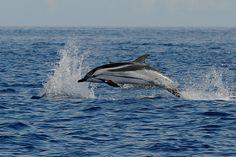 Dofí by Jordi Oller Macia