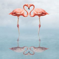 heart to heart pink flamingos