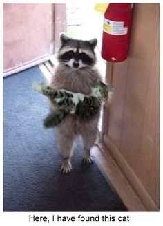 Here, I have found this cat.