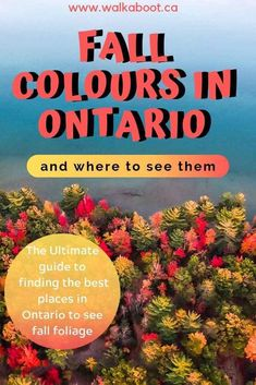 These 11 best places to see the fall colours in Ontario will blow your mind with bright red, yellow, orange and green leaves. Catch a little bit of that autumn vibe by visiting one of these amazing places during the fall season in canada and see some of the best fall colours in Ontario. Where to see fall colours near Toronto #ontariotravel #fallcolours #autumn #discoveron #toronto