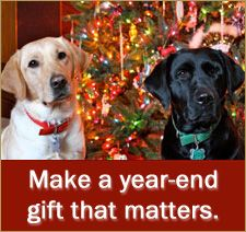 Make a gift that matters. Guiding Eyes for the Blind