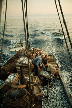 Fishermen load their catch of sardines into crates on the Adriatic Sea, 1970. - Imgur