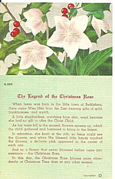 Christmas Poems, Meaning Of Christmas, Christmas Rose, Christmas Music, Christmas Activities, A Christmas Story, Christmas Printables, Christmas Pictures, Christmas Projects