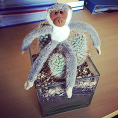 Uncomfortable monkey! #oxbridgeacademy #oxbridgeacademysa #obi #distancelearning #collegemascot #mascot #studybuddy #support