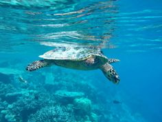 Island, Moment, Turtle, Vacation, Snorkeling, Maldives, Asia, Tips, Pictures