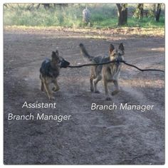 Branch Manager.
