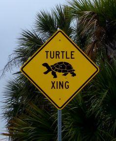 sav-turtle-xing.....omg I need this sign!!!!