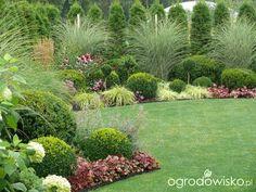 Boxwood Landscaping, Privacy Landscaping, Front Yard Landscaping, Garden Shrubs, Lawn And Garden, Back Gardens, Outdoor Gardens, Evergreen Garden, Garden Landscape Design