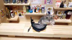 BoredPanda Little Hamster Bartenders Serving Tiny Food And Drinks