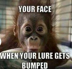 You know you look just like this baby orangutan! #fishinghumor